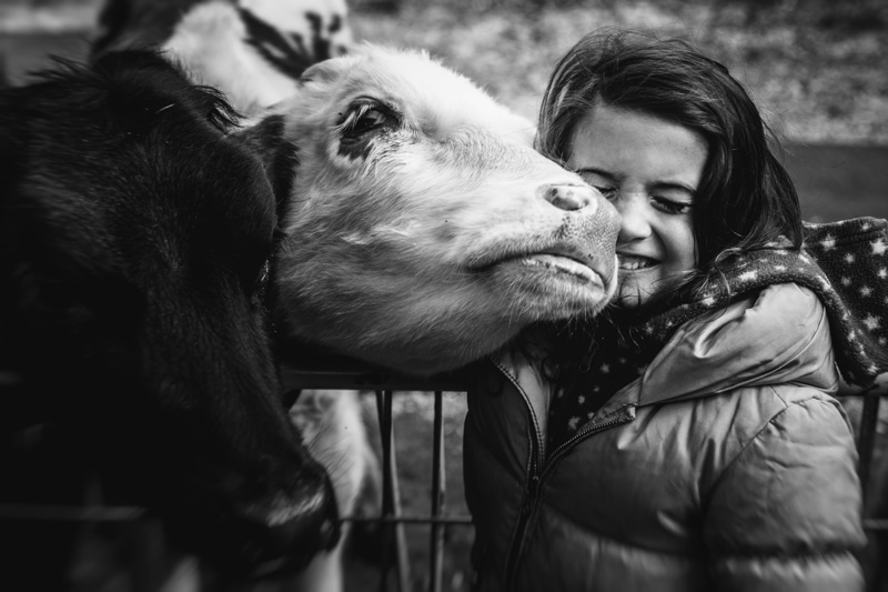 Children and Senior Photography, little girl getting snuggly with a baby cow