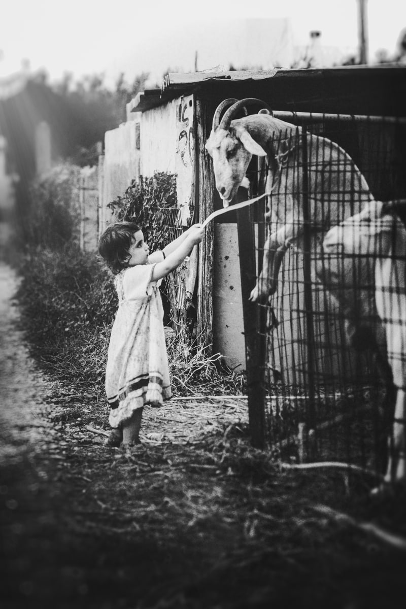 Children and Senior Photography, young girl reaching for a goat that is standing over a fence